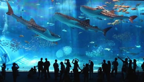 Barcelona-Aquarium-2